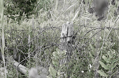 Photograph - Wire Post by Edward Kay