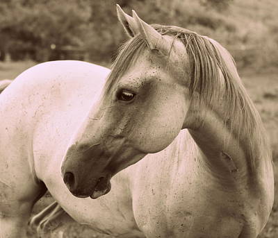 Horse Photograph - A Wisconsin Grey Mare by Megan Luschen