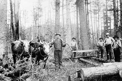 Logging Painting - Wisconsin Logging, 1886 by Granger