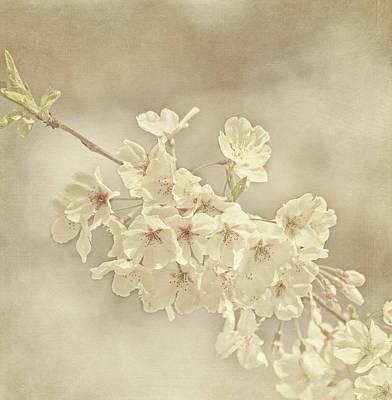 Flower Gardens Photograph - Wisdom by Kim Hojnacki
