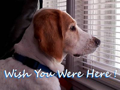 Dog Photograph - Wish You Were Here by Mark Moore