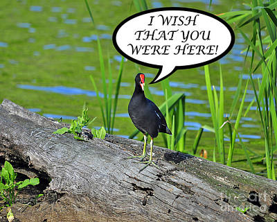 Moorhen Photograph - Wish You Were Here Moorhen Card by Al Powell Photography USA