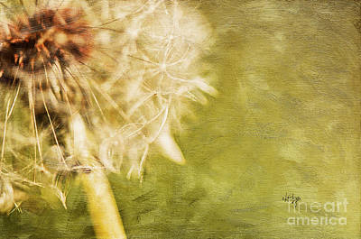 Dandelion Digital Art - Wishful Thinking by Lois Bryan