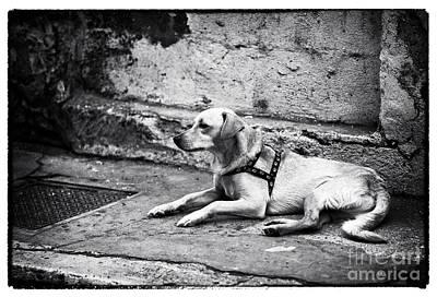 Dog Pics Photograph - Wishing For A Friend by John Rizzuto