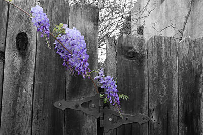 Hardware Photograph - Wisteria by Dylan Punke