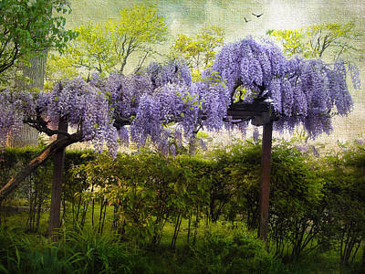 Garden Flowers Digital Art - Wisteria Trellis by Jessica Jenney