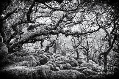 Wildwood Photograph - Wistmans Wood Dartmoor Devon  by Tim Gainey