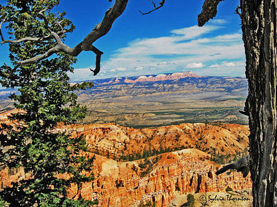 Bryce Photograph - With God's Paintbrush by Sylvia Thornton