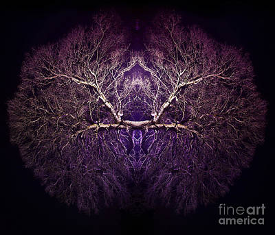Symmetry Photograph - Within by Tim Gainey
