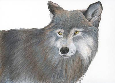 Siberian Husky Drawing - Wolf 6 21 2014 by Minnie Lippiatt