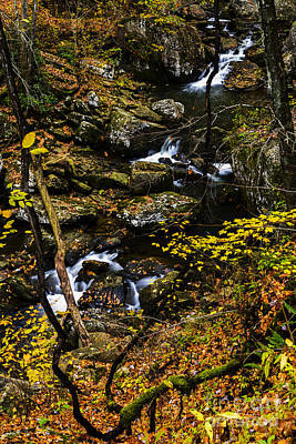 Grapevine Photograph - Wolf Creek Cascade by Thomas R Fletcher