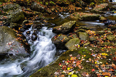 Wolf Creek Photograph - Wolf Creek New River Gorge by Thomas R Fletcher