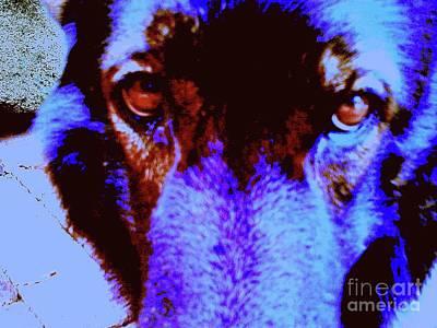 Wolf Eyes Print by Nina Kaye