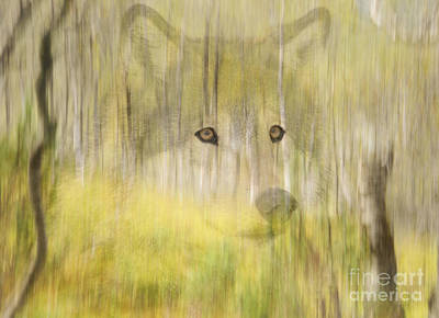 Wolf Photograph - Wolf In The Forest by Gry Thunes