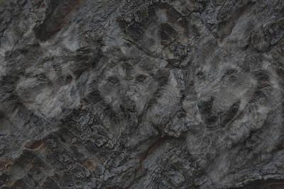 Wolf Shadows Print by Ernie Echols