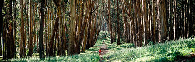 Presidio Park Photograph - Woman Walking On A Path In A Park, The by Panoramic Images