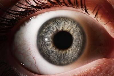 Human Eye Photograph - Woman's Eye by Mcs