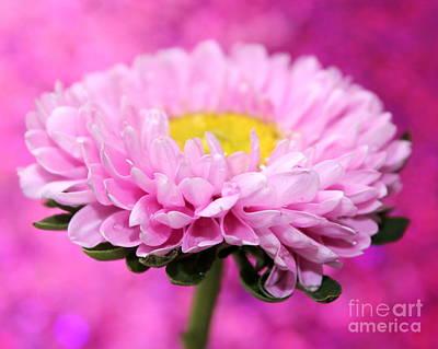 Daisies Photograph - Wonder In Pink by Krissy Katsimbras