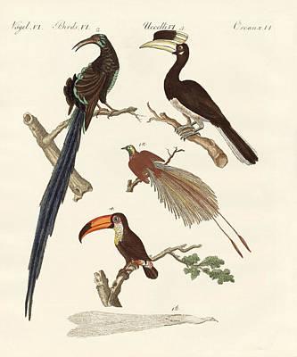 Toucan Drawing - Wonderful Birds by Splendid Art Prints