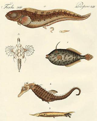 Seahorse Drawing - Wonderful Fish by German School