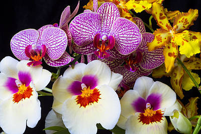 Pretty Orchid Photograph - Wonderful Lovely Orchids by Garry Gay