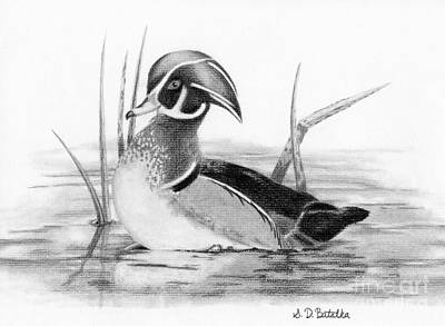 Black And White Bird Drawing - Wood Duck In Pond by Sarah Batalka