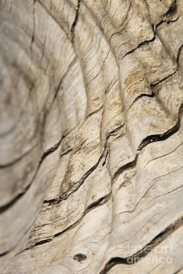 Wood Grain Grunge And Texture Print by Hermanus A Alberts