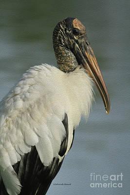 Stork Photograph - Wood Stork In Oil by Deborah Benoit