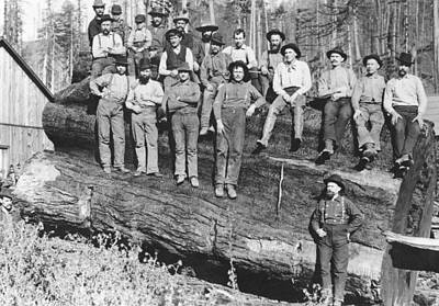 Woodcutters In California, 1891 Bw Photo Print by American Photographer