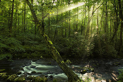 Tennessee Photograph - Wooded Rays by Andrew Soundarajan