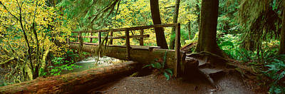 Wooden Bridge In The Hoh Rainforest Print by Panoramic Images