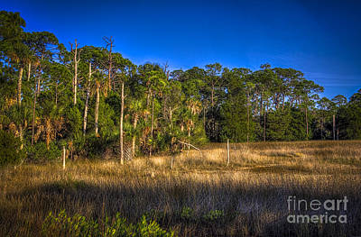 Woodland And Marsh Print by Marvin Spates
