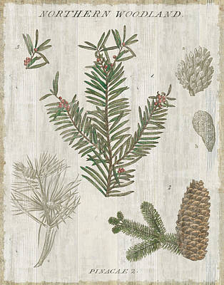Pine Needles Painting - Woodland Chart II by Sue Schlabach