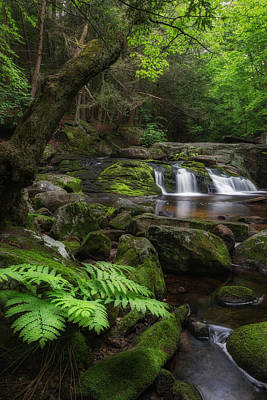 Spring Landscape Photograph - Woodland Falls by Bill Wakeley