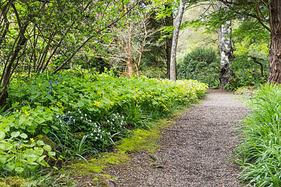 Branches Photograph - Woodland Pathway by Priya Ghose