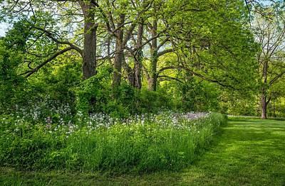 Woodland Phlox   Print by Steve Harrington