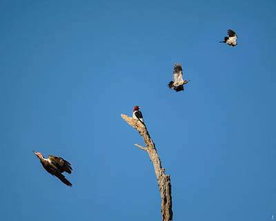 Woodpecker Photograph - Woodpecker Games by Jai Johnson