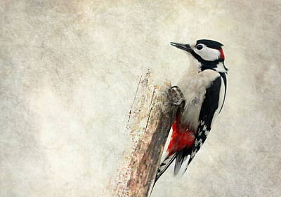 Woodpecker Mixed Media - Woodpecker In Nature by Heike Hultsch