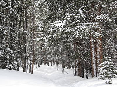 Summit County Colorado Photograph - Woods In Winter by Eric Glaser
