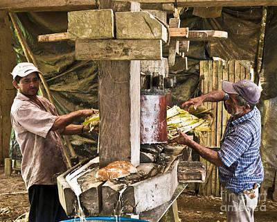 Working Hard For Sugar Print by Heiko Koehrer-Wagner