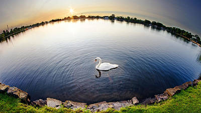 World Of A Swan Print by Vicki Jauron