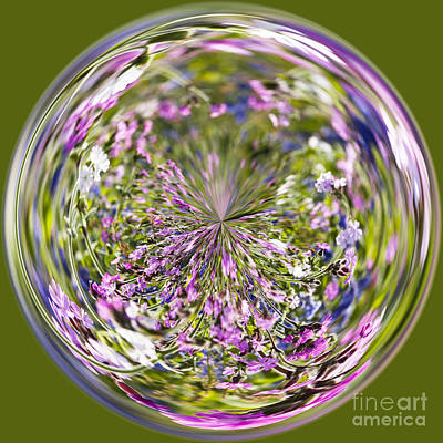Manipulation Photograph - World Of Welsh Wildflowers by Anne Gilbert