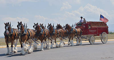 Budweiser Photograph - World Renown Clydesdales 2 by Kae Cheatham