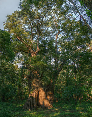 Louisiana Digital Art - World's Largest Bald Cypress by Ron  Burt