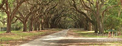 Georgia Plantation Photograph - Wormsloe Oaks Panorama by Adam Jewell