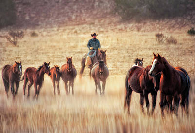 Wrangler And Horses On Ranch In New Print by Sheila Haddad