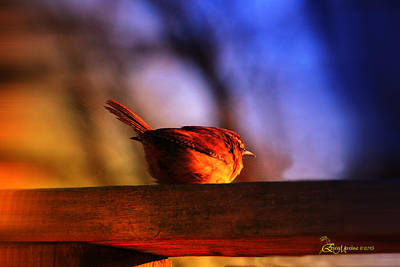 Wren In Early Morning's Light - Featured In In Newbies-nature Wildlife- Comfortable Art Groups Print by EricaMaxine  Price