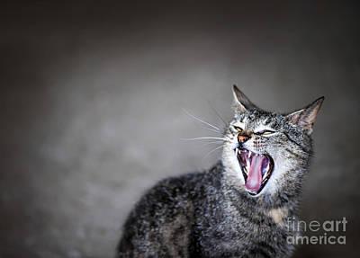Sleepy Photograph - Yawning Cat by Elena Elisseeva