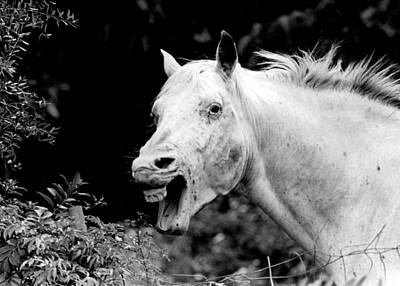 Yelling Horse Print by Retro Images Archive