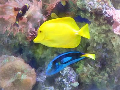 Coral Photograph - Yellow And Blue Tang Fish by Susan Savad